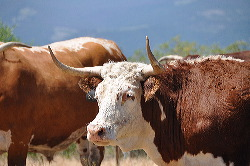 Este rancho perteneció a una familia alemana que un emigrante empezó  trabajando para otros 763e2301b71